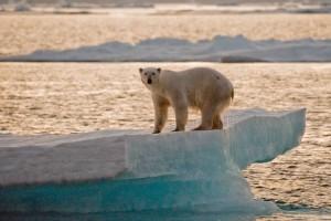 10_Groenland 2011_KV