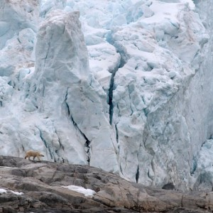 Voir les ours blancs au Spitsberg avec croisière Southern Star 69 NORD
