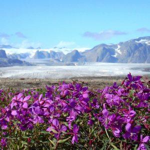 Glacier Charcot visible en randonnée avec 69 NORD
